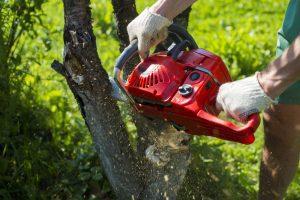 sherwood arkansas tree removal best tree service professional company north little rock little rock lr nlr trees services jacksvonille ar