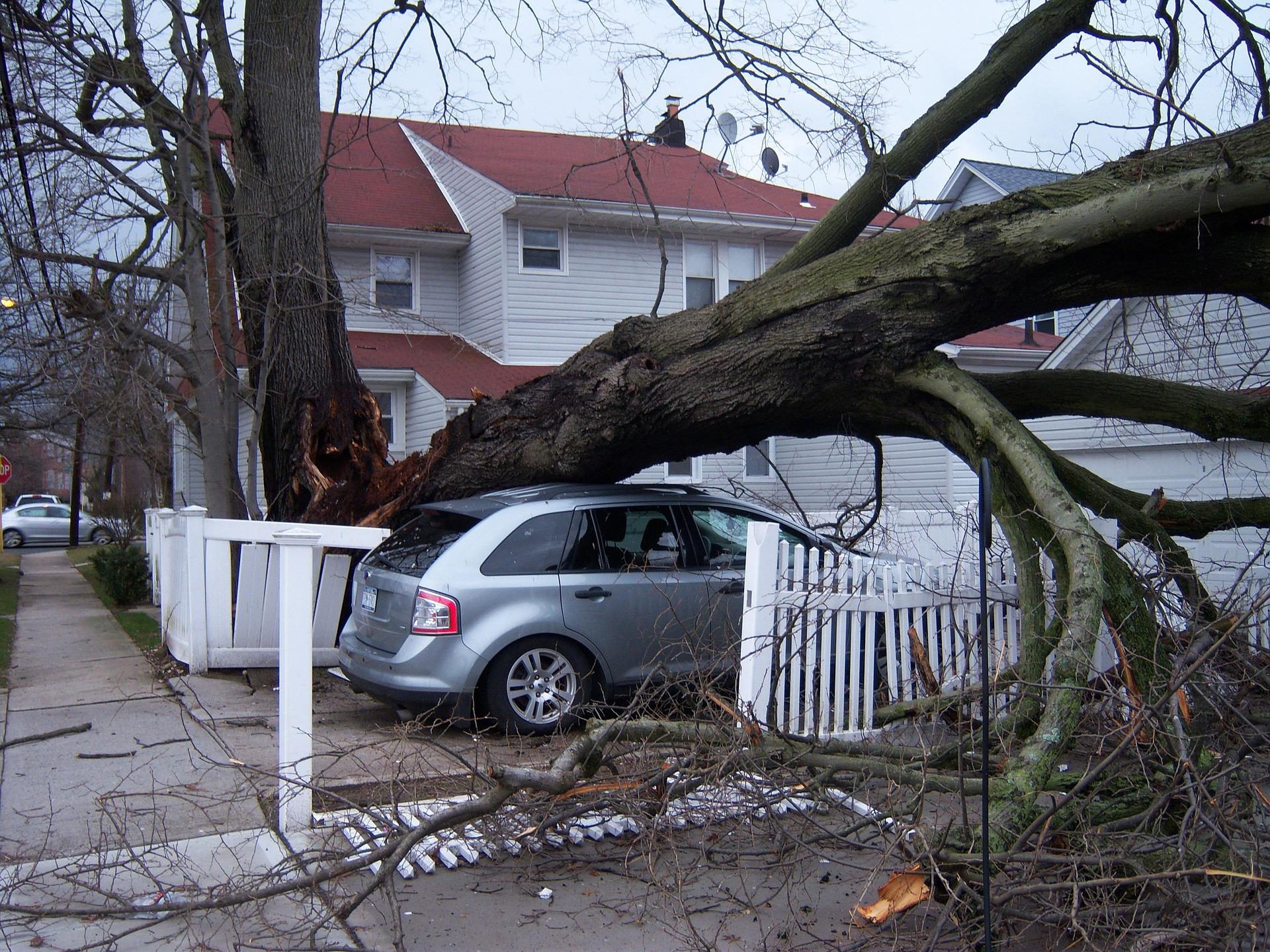sherwood ar emergency tree service services